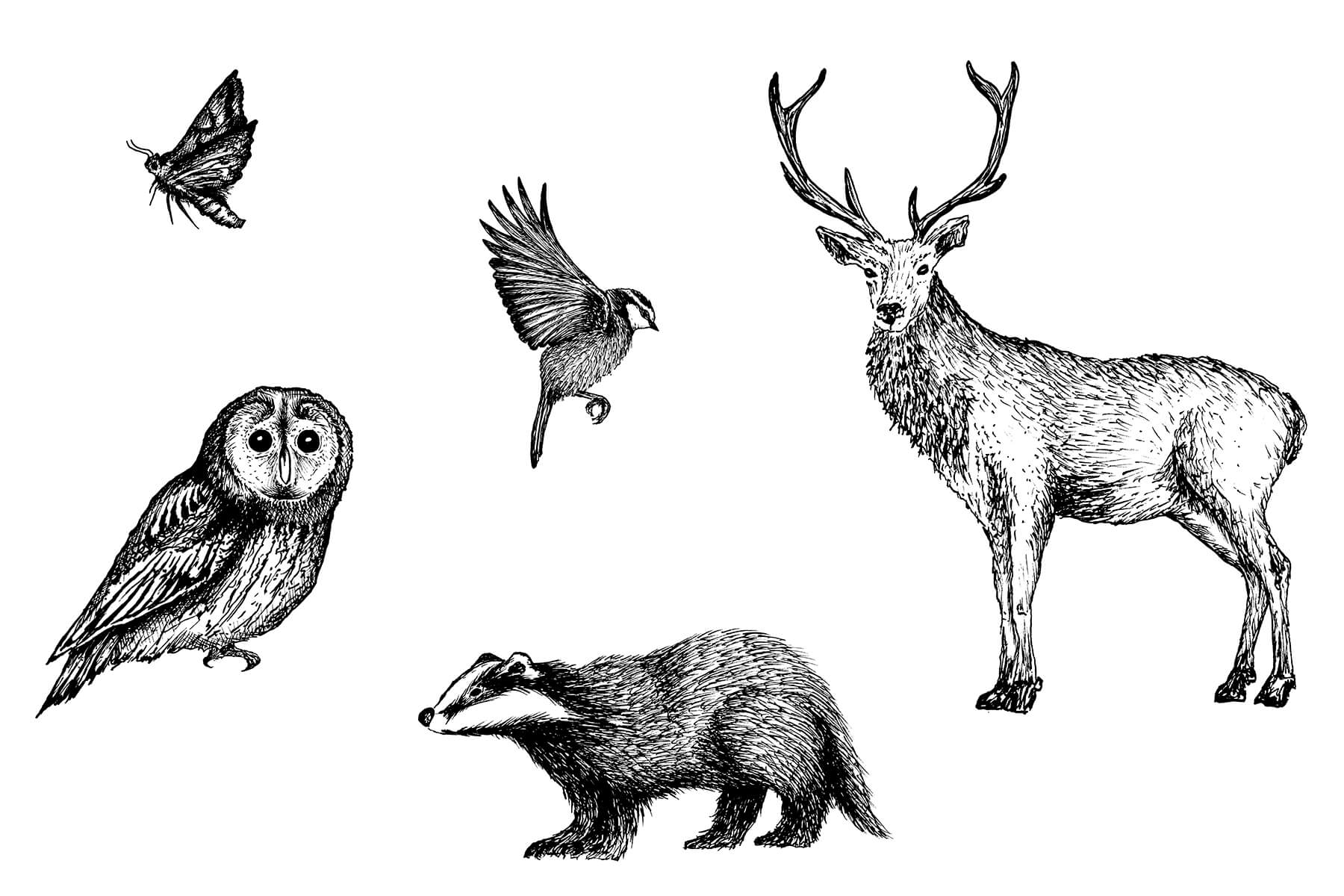 Wytham Woods Illustrations